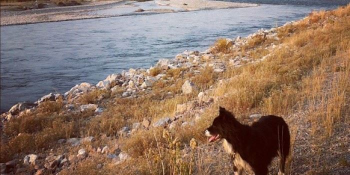 A dog standing on the bank of a river.
